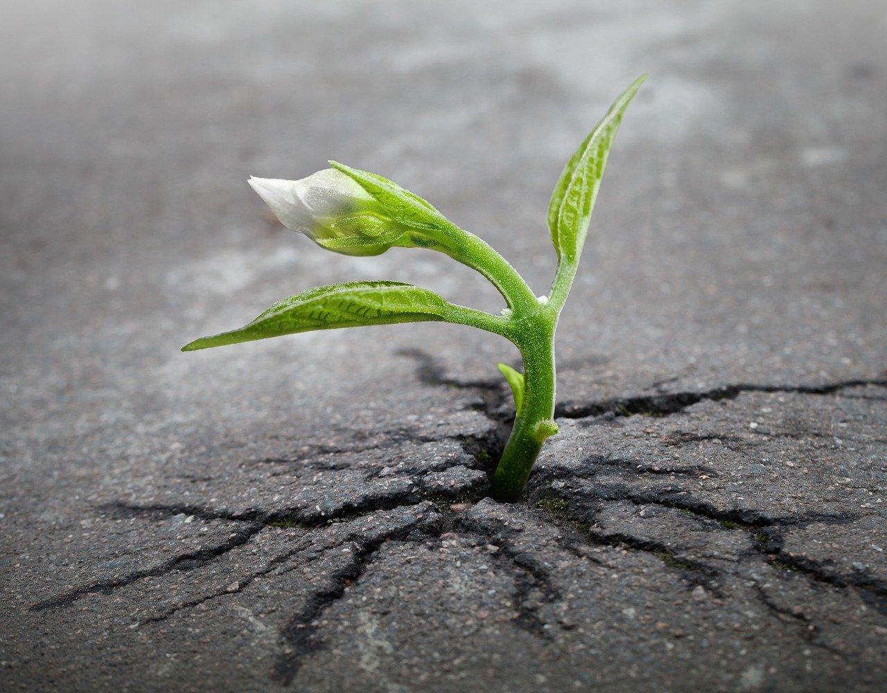 Nieuwjaar 83 Plant in asfalt