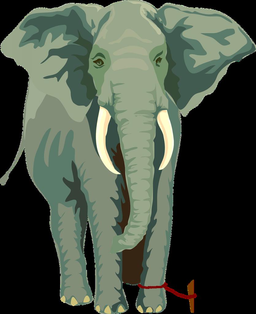 Collectief geheugen :Olifant  gebonden aan touw